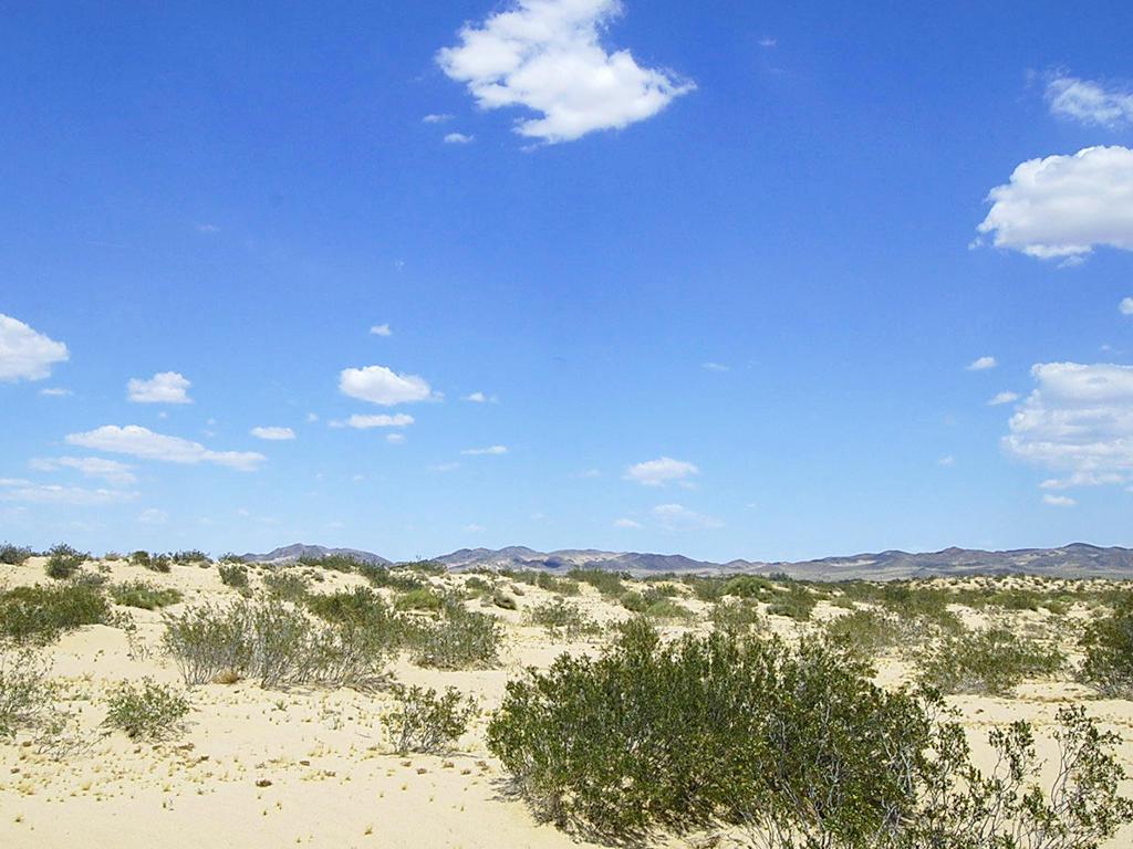 5 Acres on Gorgeous Desert Landscape - Image 1