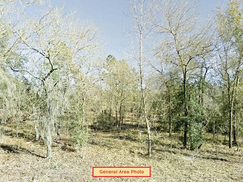 Rectangular Quarter Acre in Rural Florida - Image 3