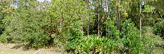 Over Half Acre Treed Lot in Crystal River
