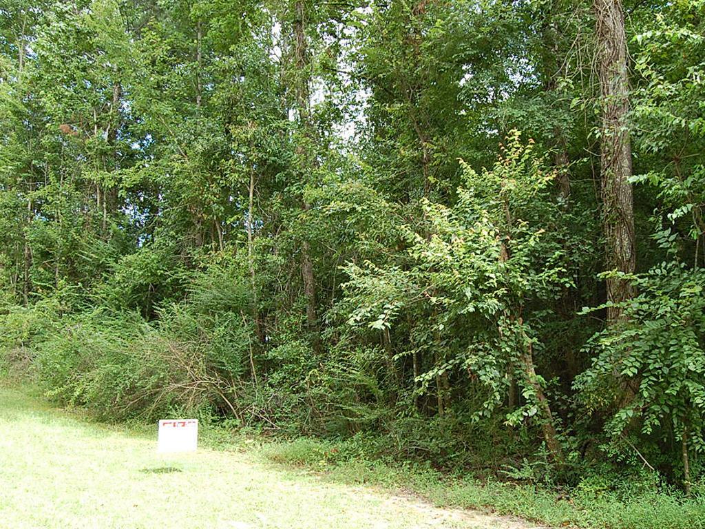 More than a Quarter Acre Near Coosa River - Image 4