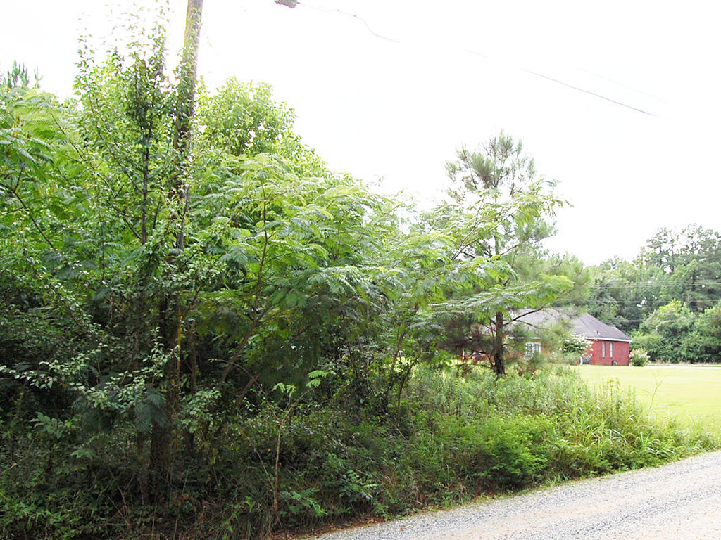 Amazing 3 Acres with Southern Charm - Image 4