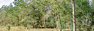 Fertile Florida Land on Near Quarter Acre