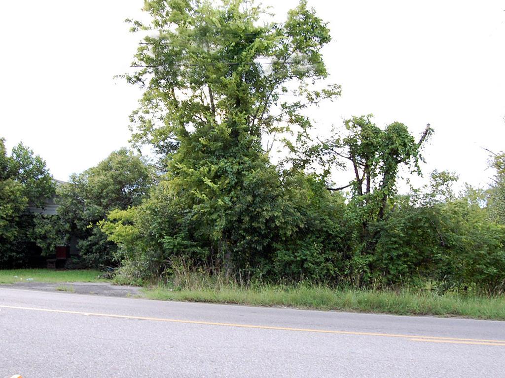 Quarter Acre Alabama Lot in Gorgeous Gadsden - Image 4