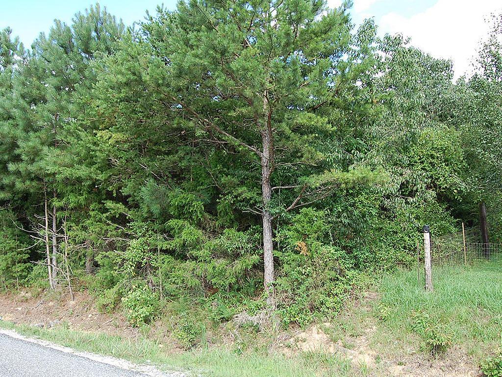 Amazing 1 Acre Near Prestwood Lake - Image 3