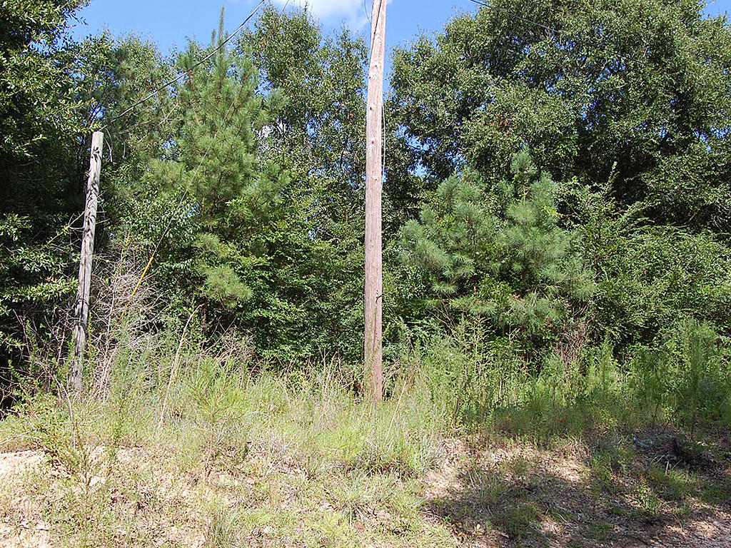 Three-Quarter Acre Tuskegee Rural Living - Image 1