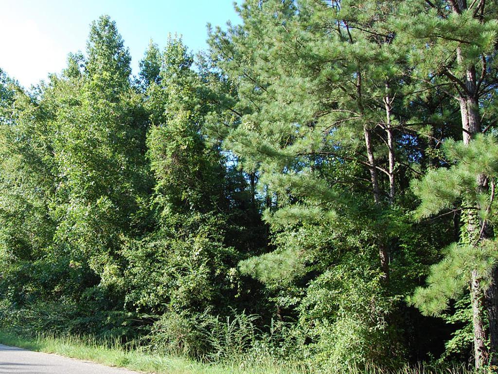 Rustic Charmer in Rural Alabama - Image 4