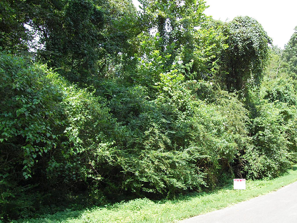 Residential Lot Minutes from the Tennessee River - Image 4