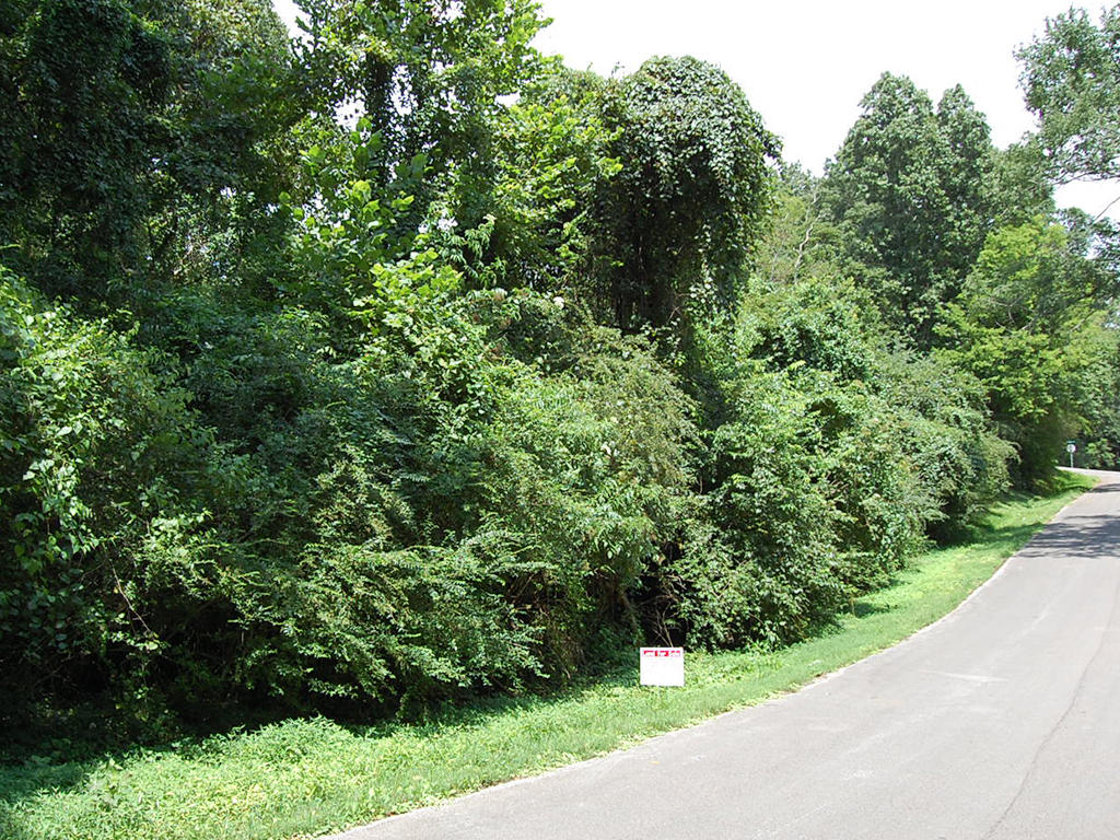 Residential Lot Minutes from the Tennessee River - Image 1