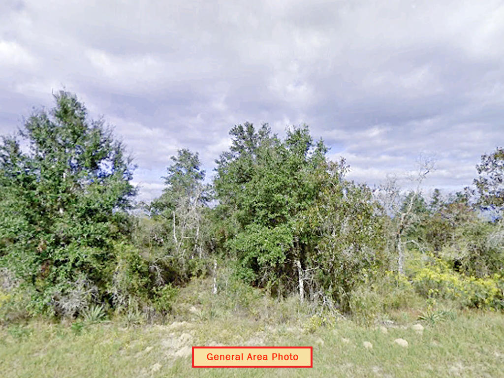 Florida Pan Handle Property on Paved Road - Image 1