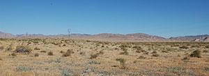 Stunning 40 Acres of Rich Desert Land