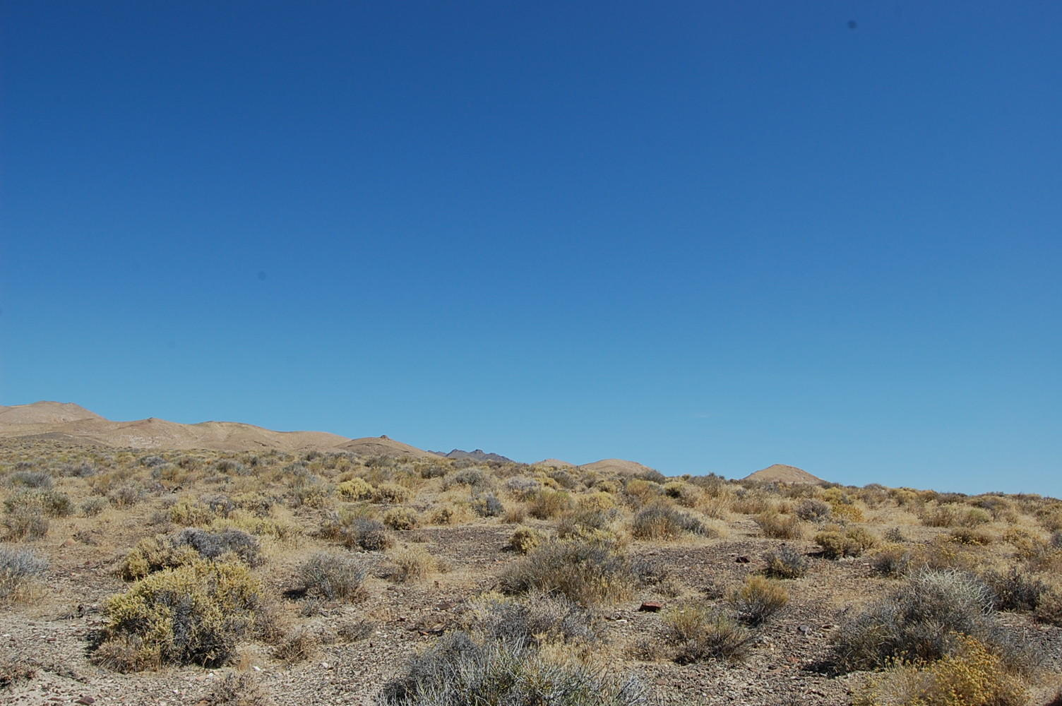 Over 40 Acres in Western Nevada - Image 6