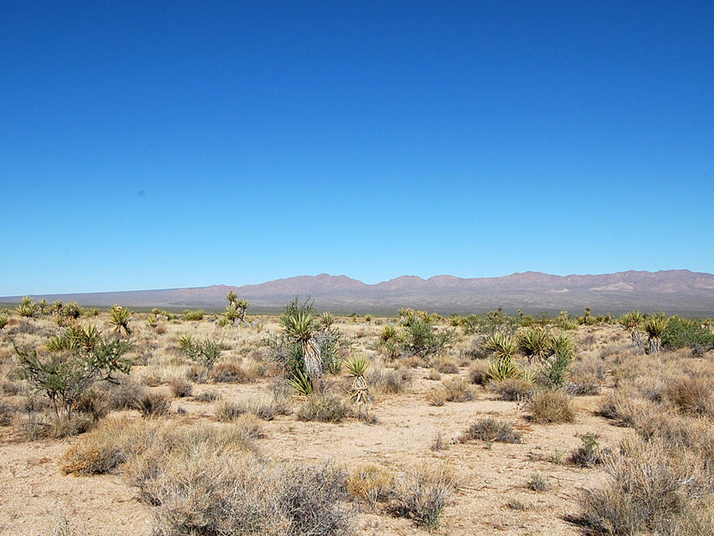Nearly 40 Acres in Eastern California, 90 minutes from Las Vegas - Image 1