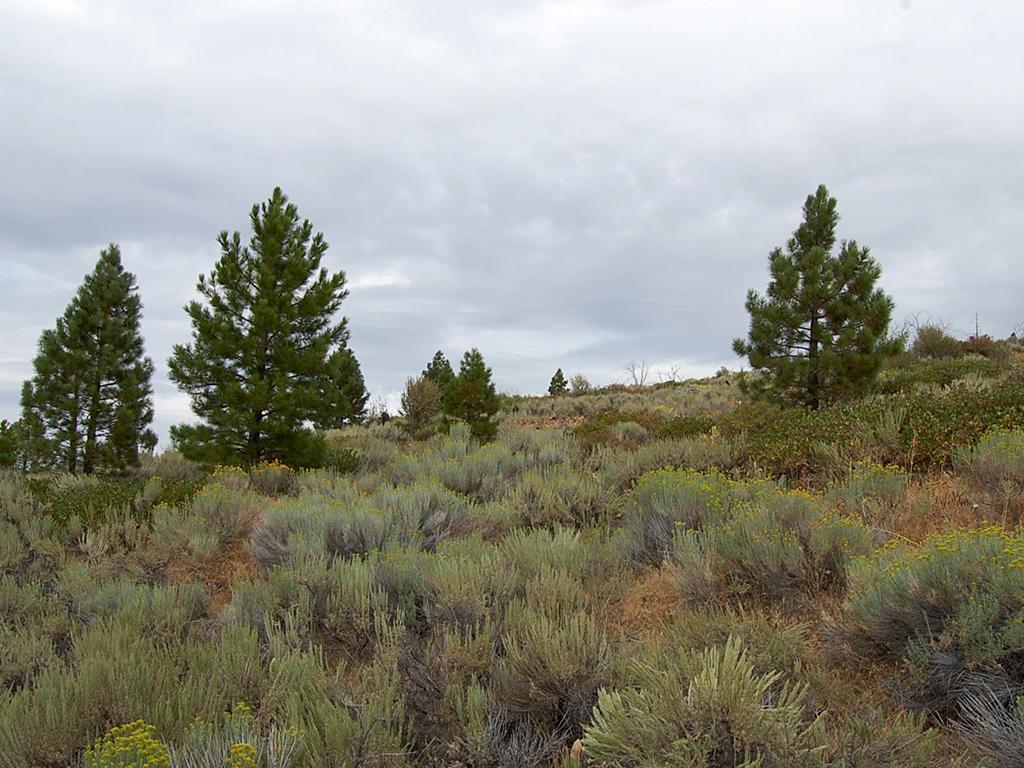 Rustic Gem in California Pines - Image 3