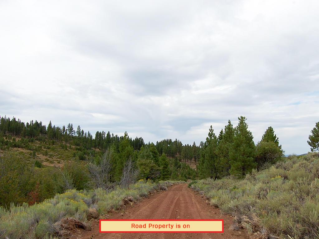 Rustic Gem in California Pines - Image 4