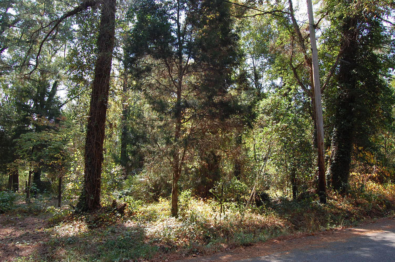 Columbia South Carolina Suburb Property - Image 4
