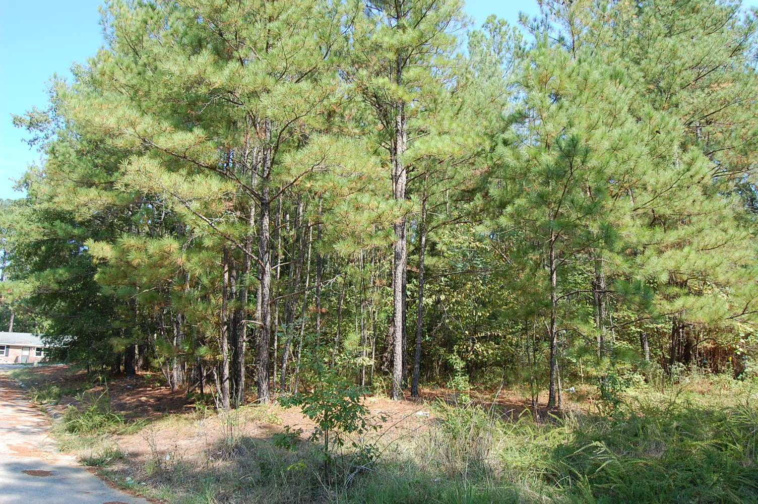 Charming Corner Lot in the Palmetto State - Image 0