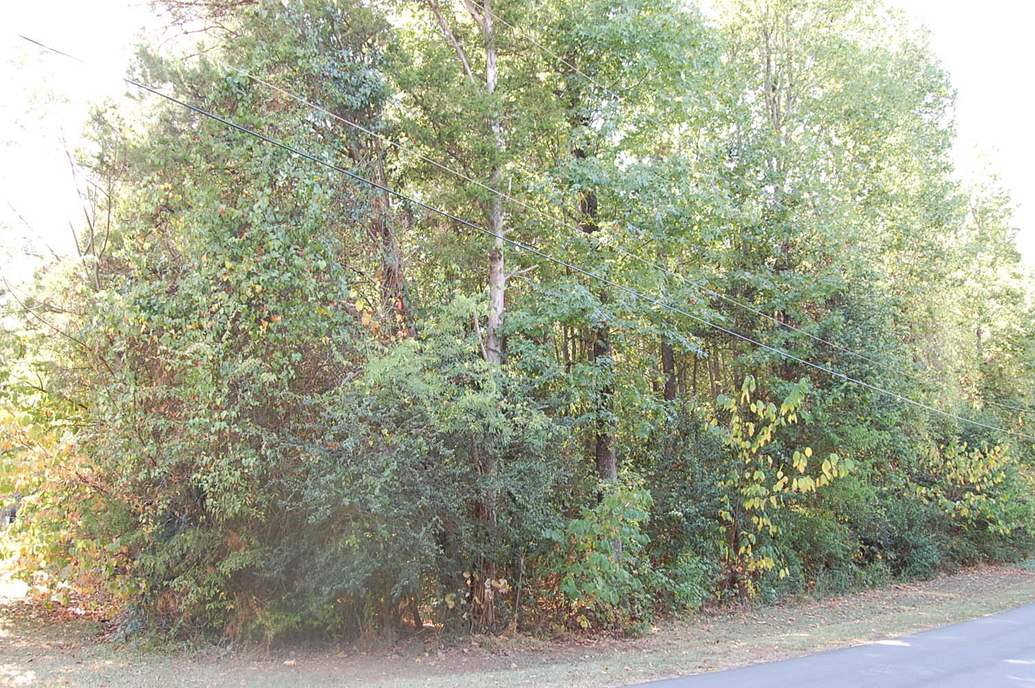 Stunning Lakeside Lot in Charming Community - Image 4