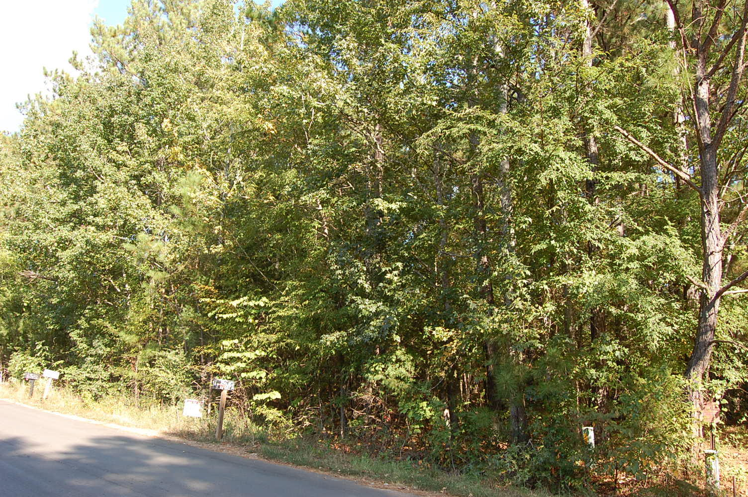 Nearly a Half Acre in Calhoun Falls - Image 3