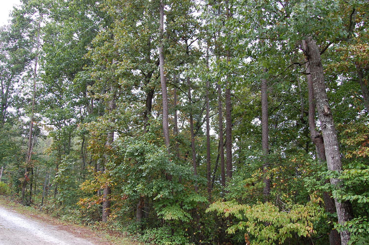 Over One Acre Madison South Carolina River Side Property - Image 3