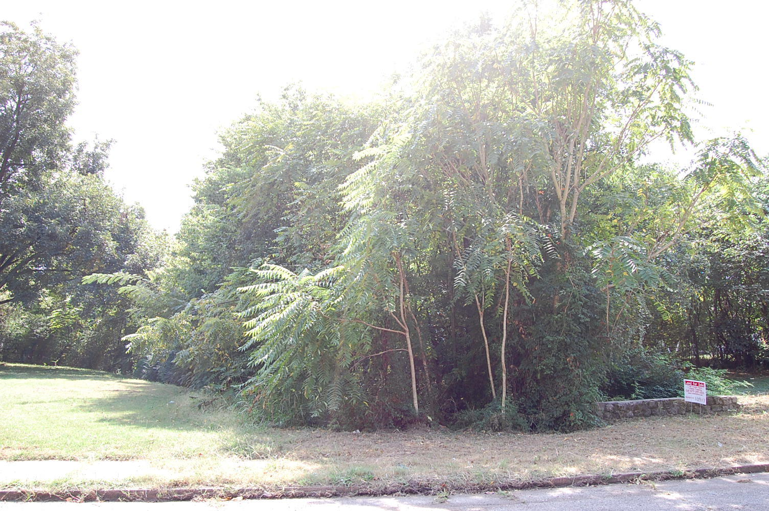 Amazing Land Deal on More than Quarter Acre - Image 5