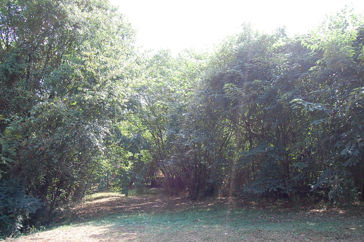 Amazing Land Deal on More than Quarter Acre - Image 1