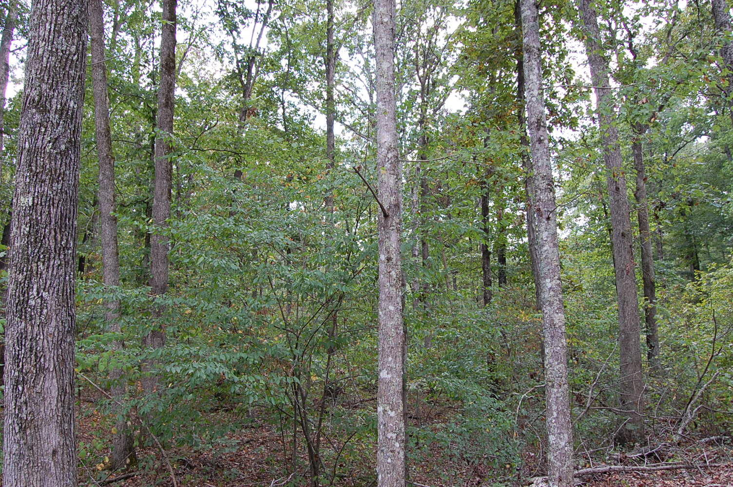 Forested Land in Friendly Town - Image 2
