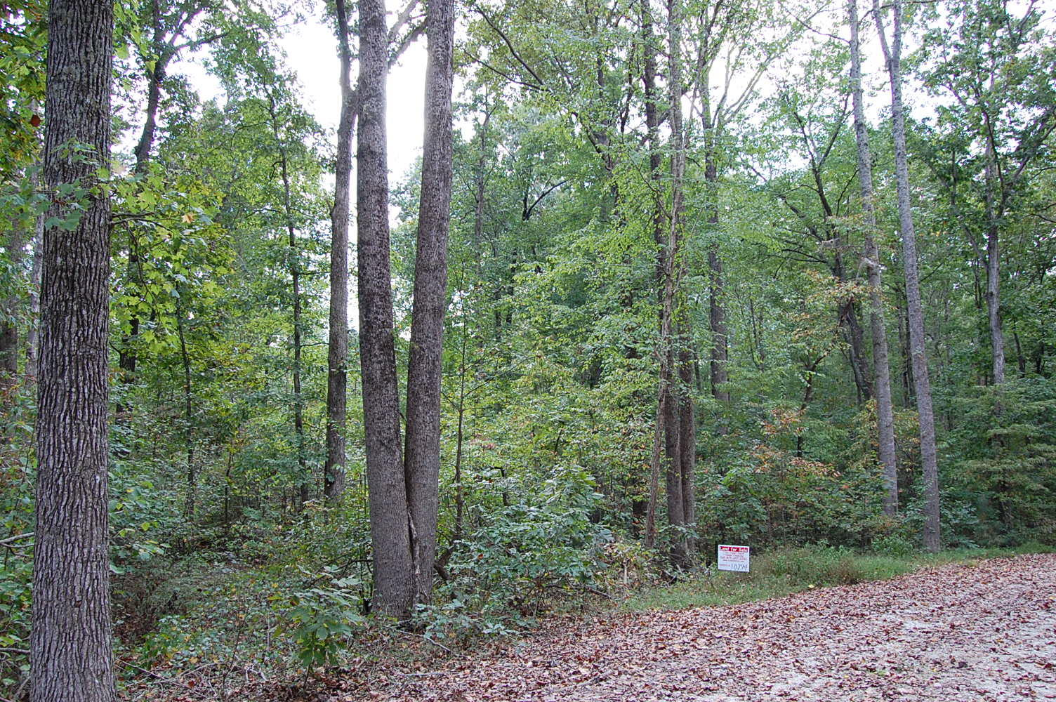 Forested Land in Friendly Town - Image 3