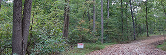 Forested Land in Friendly Town