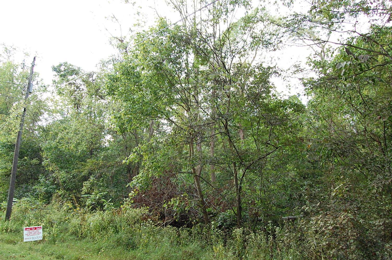 Half Acre Lot Near Cumberland River - Image 2
