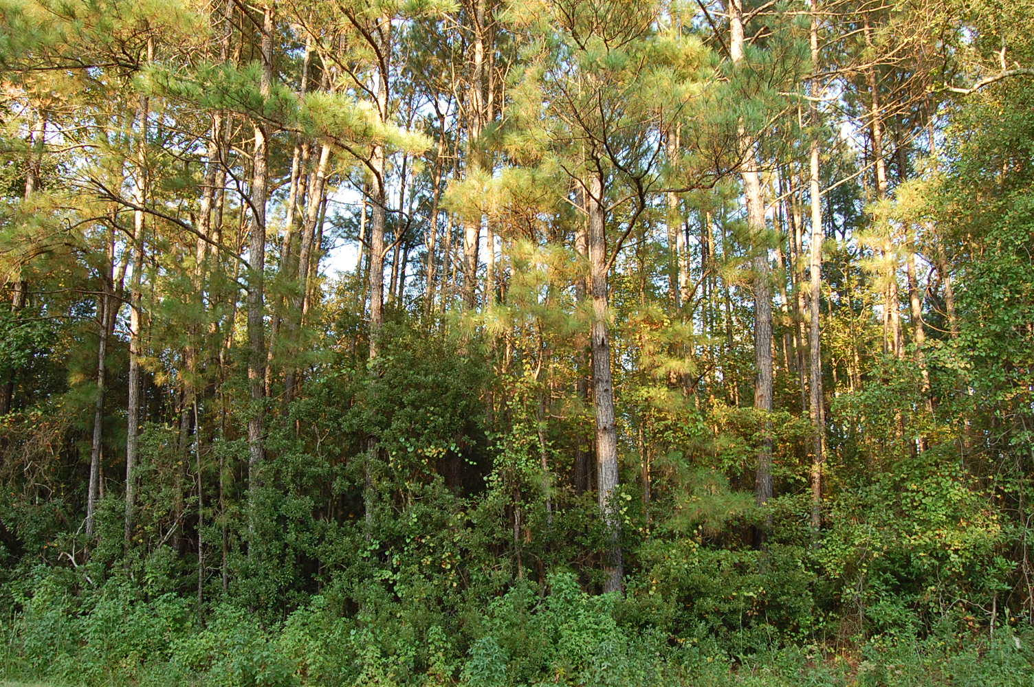 Large Lot in Beautiful North Carolina Countryside - Image 3