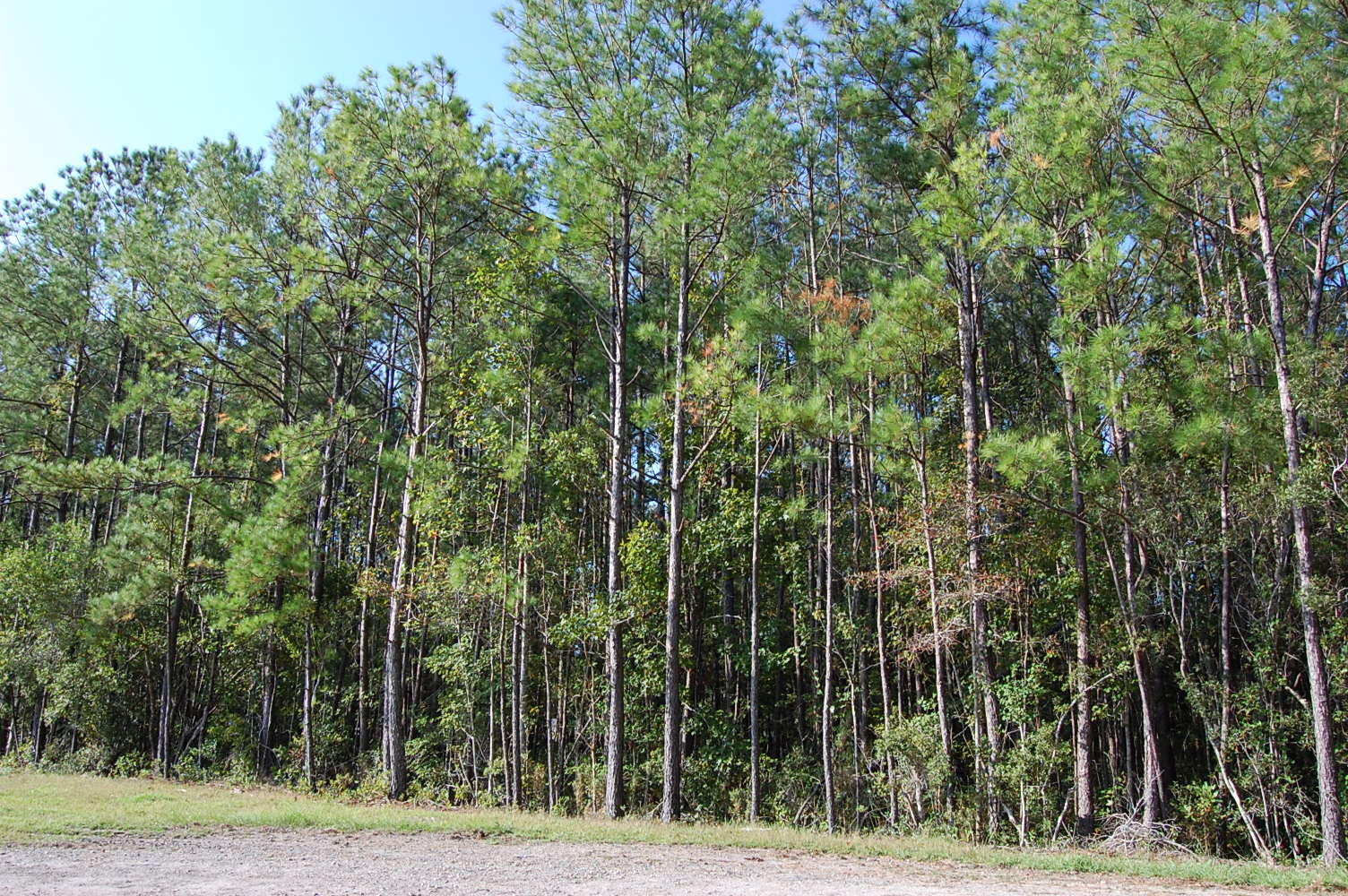 Lovely Private Half Acre Lot Near Rocky Point - Image 1