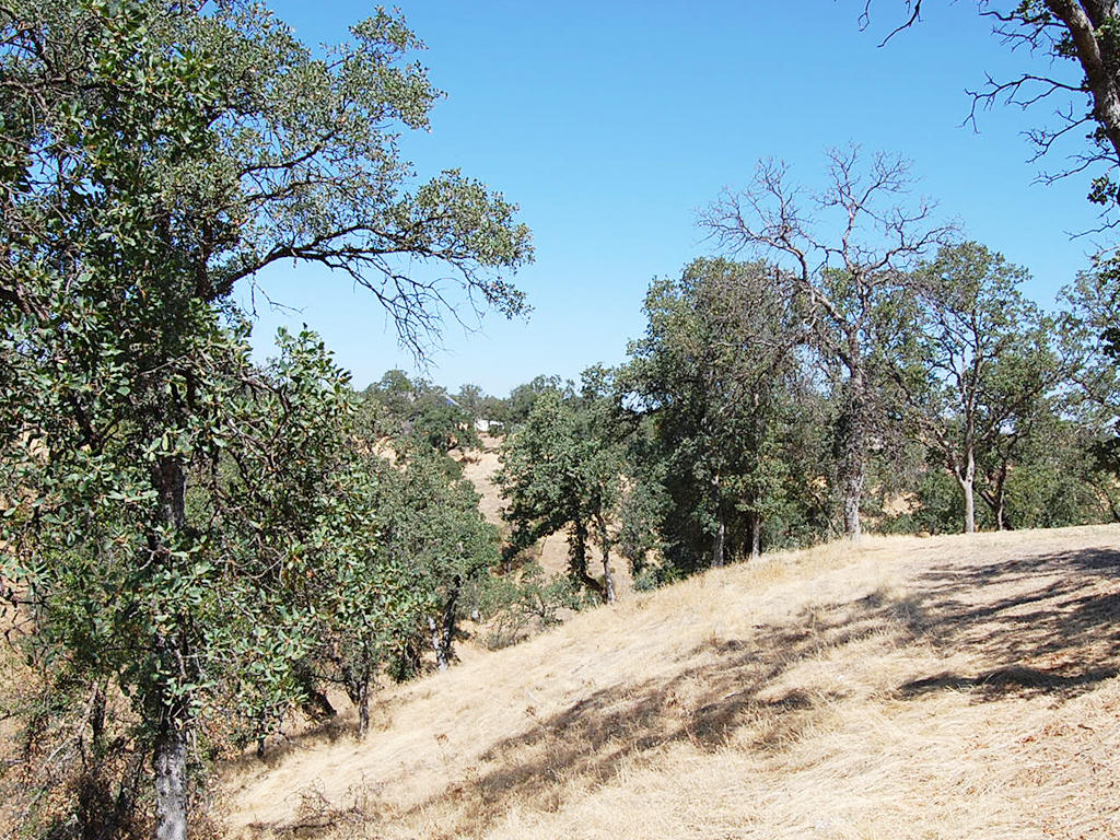 Over Quarter Acre California Lot near Beautiful Cottonwood - Image 4