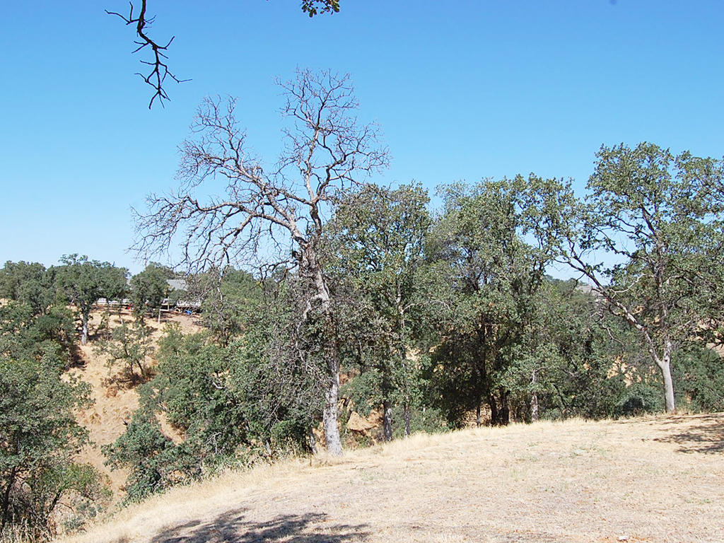 Over Quarter Acre California Lot near Beautiful Cottonwood - Image 5