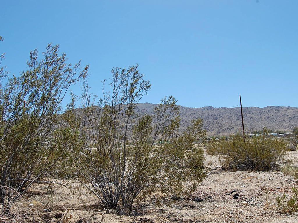 Quiet Living in Heart of Mojave Desert - Image 3