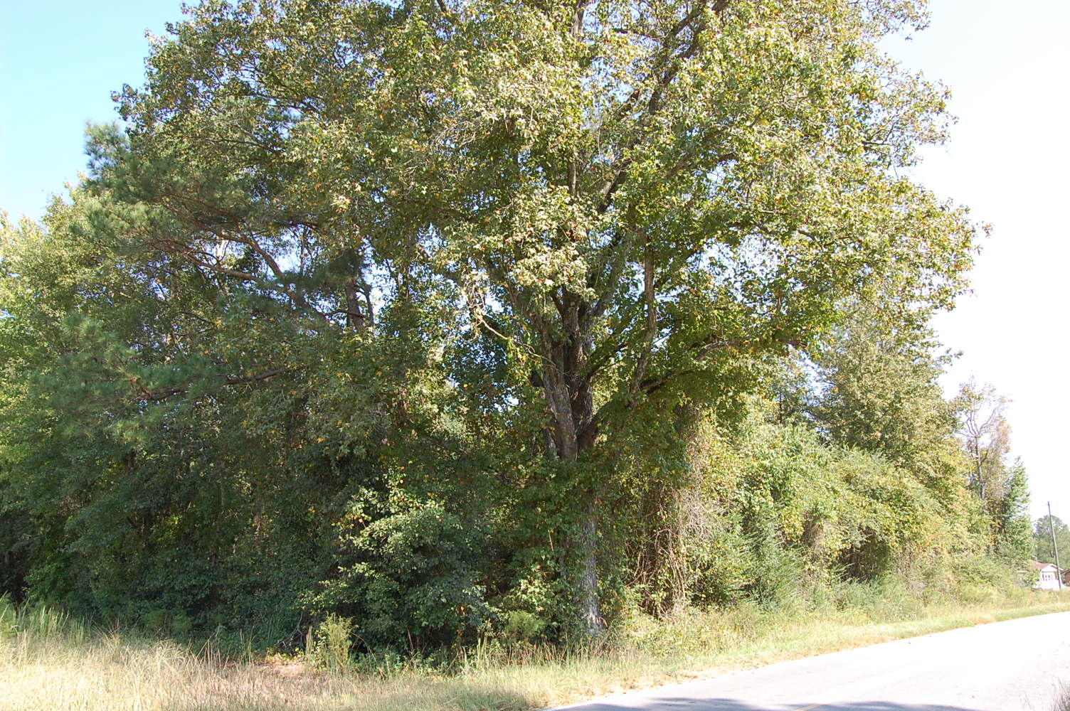 Nearly 1 Acre in Quaint Southern Community - Image 2