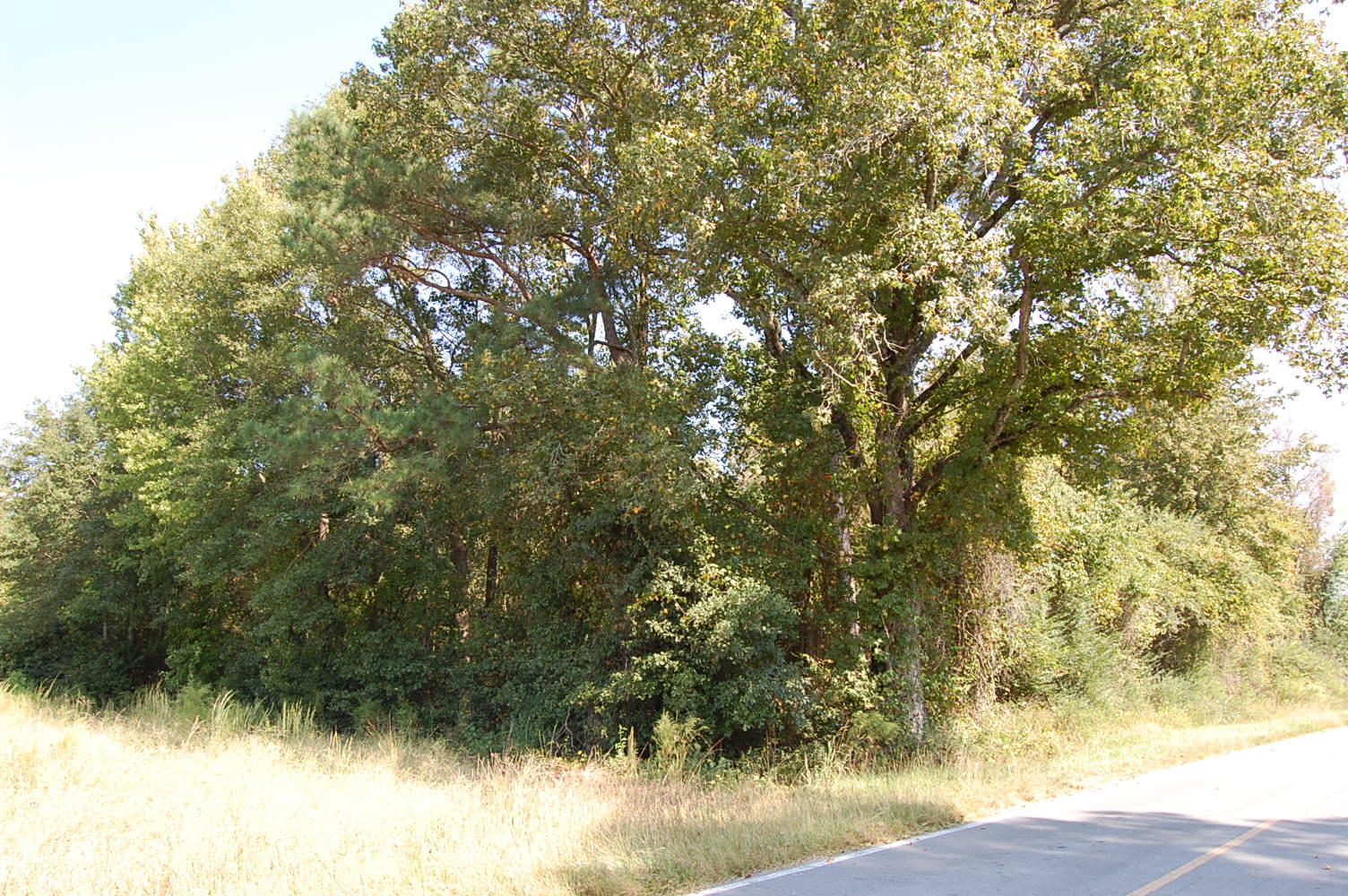 Nearly 1 Acre in Quaint Southern Community - Image 0