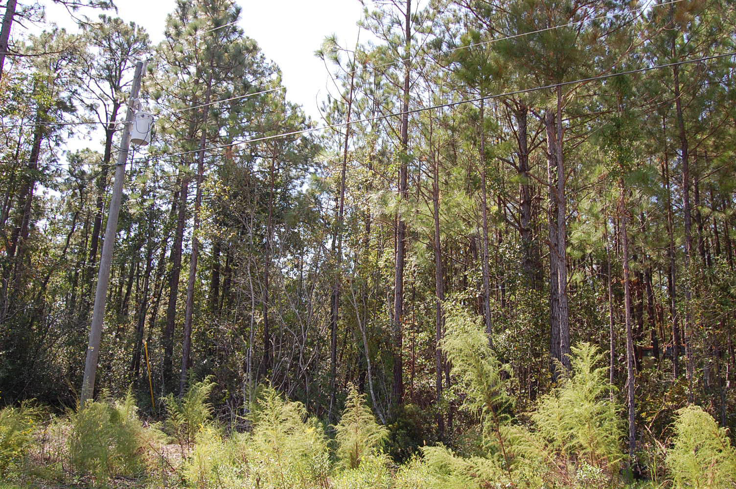 One Acre Property Minutes from the Topsail Beach - Image 4