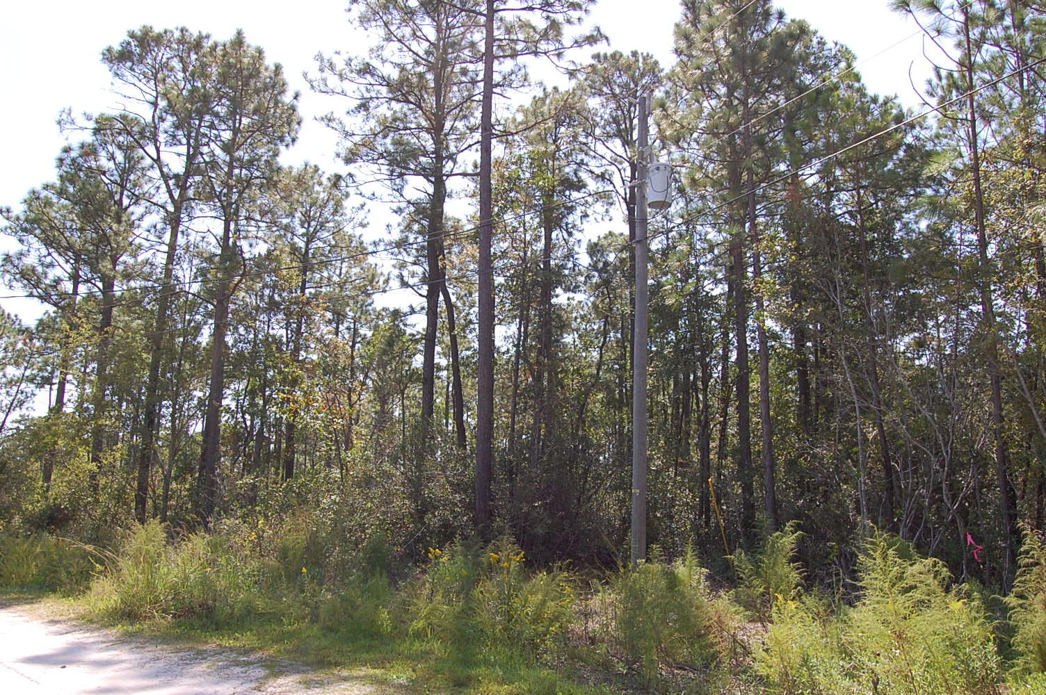 One Acre Property Minutes from the Topsail Beach - Image 0