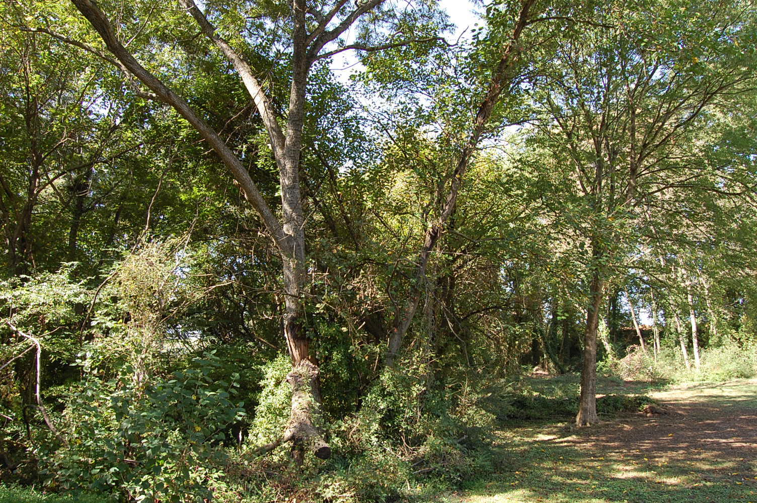 Over a Quarter Acre in Henderson North Carolina - Image 4
