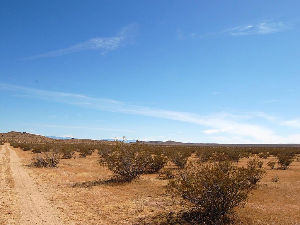 Desert Living on Expansive 2 Acres - Image 4