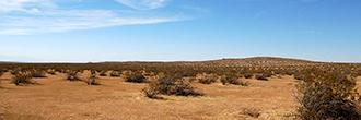Desert Living on Expansive 2 Acres