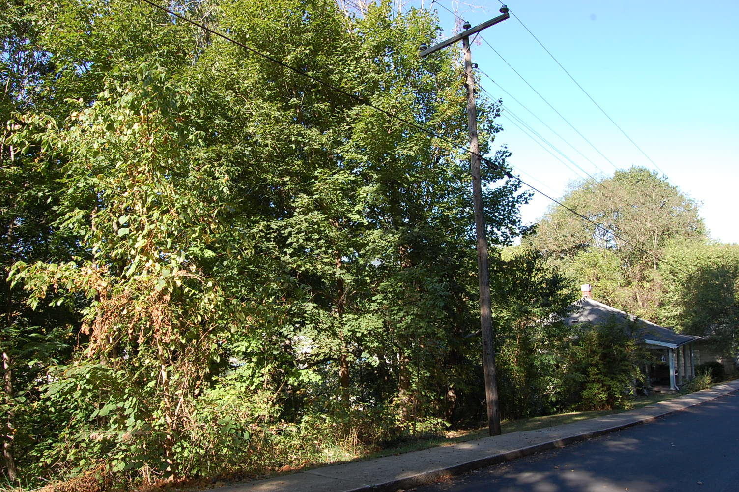 Near Quarter Acre on Historic Land - Image 4