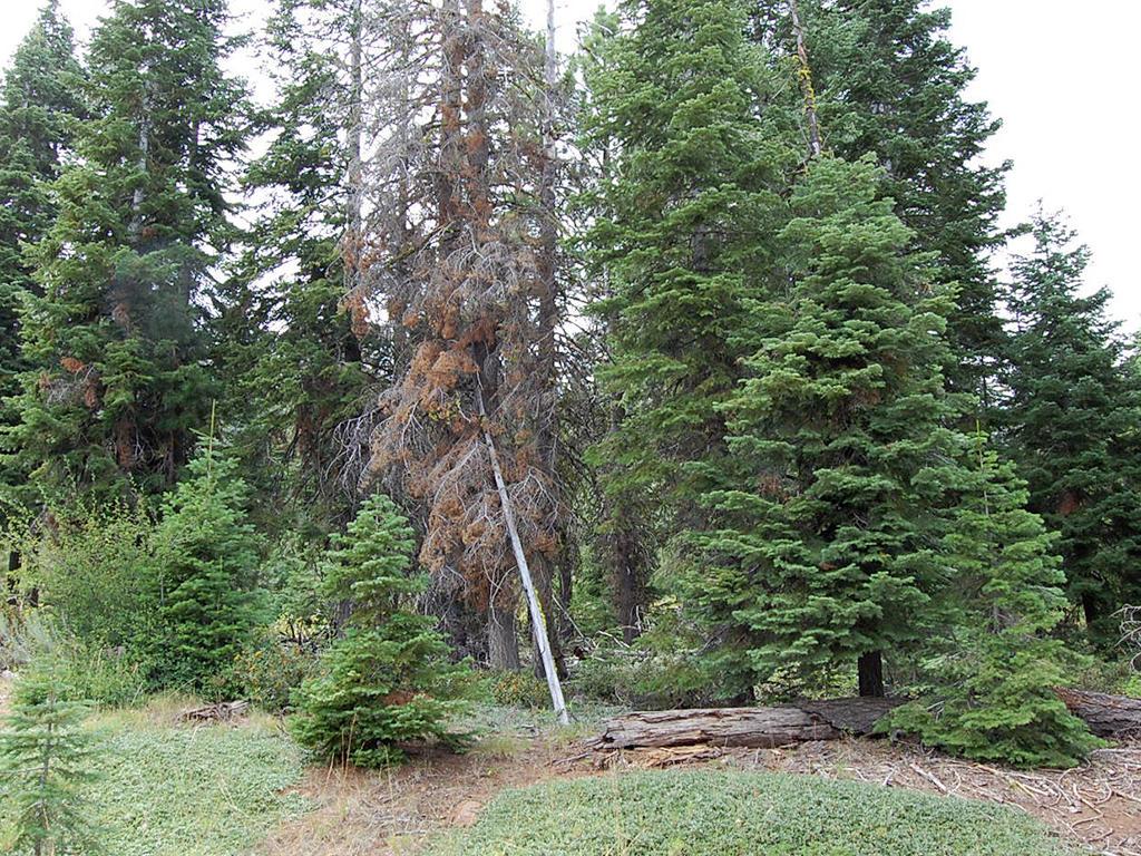 Near Full Acre of Rural California Land - Image 4
