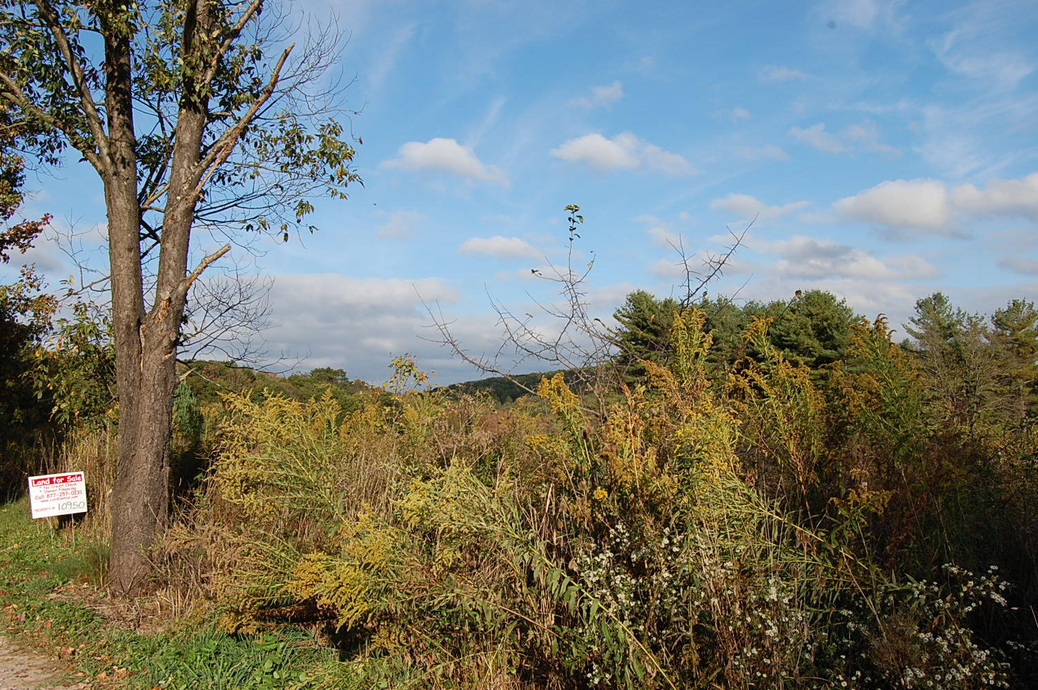 Enjoy Maryland Country Living Close to Town - Image 1