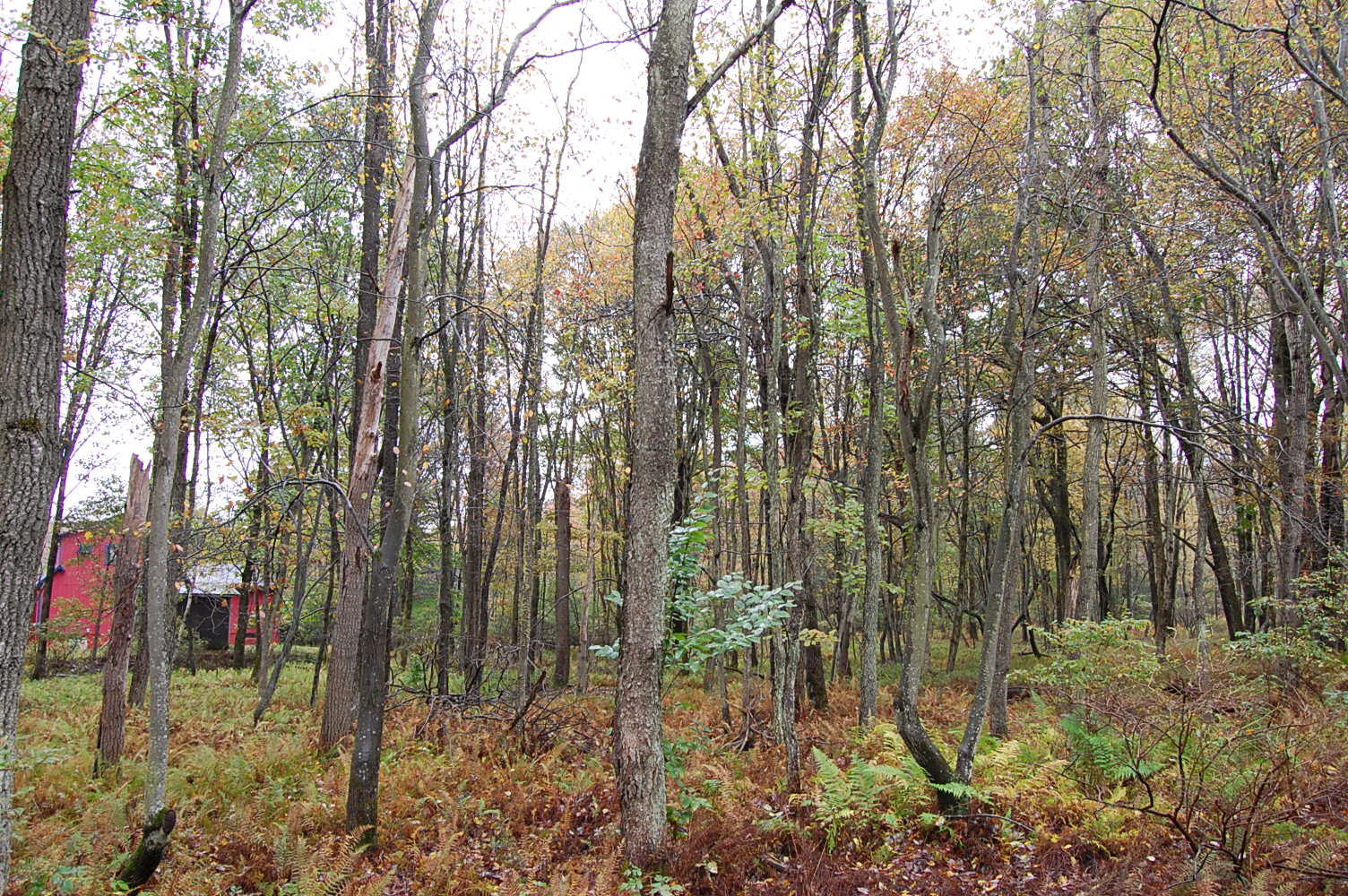 Eastern Pennsylvania Rural Double Lot - Image 5