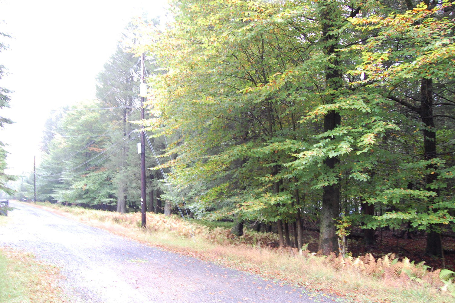 More Than Half Acre on Historic Land - Image 0