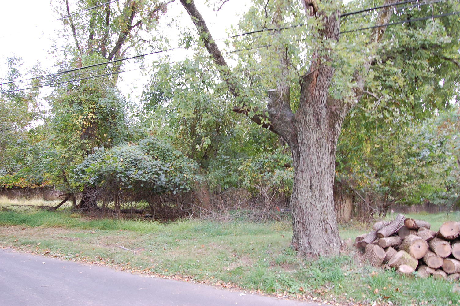 Small Property Nestled Near Silver Lake - Image 3