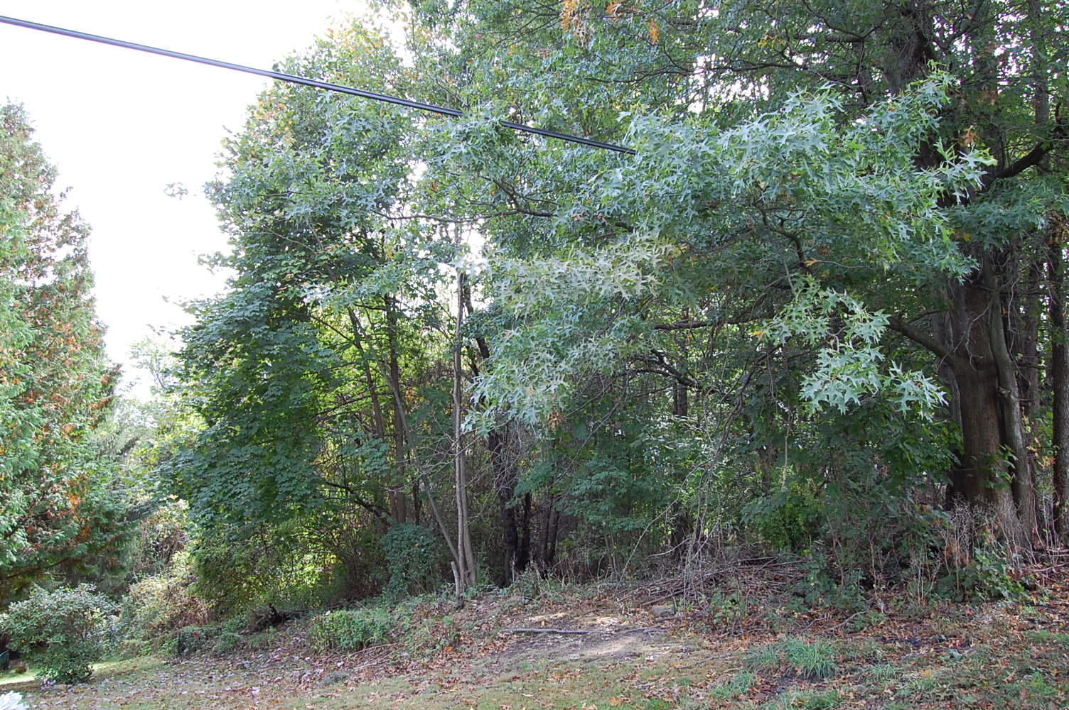 Rare Two Parcel Lot Sold as One in Vibrant Community - Image 4