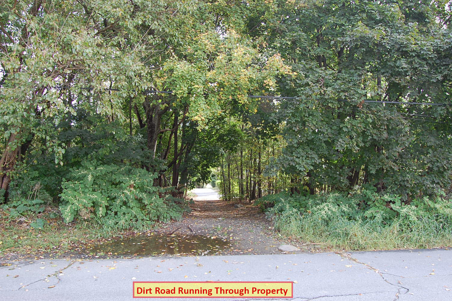 Rare Two Parcel Lot Sold as One in Vibrant Community - Image 5