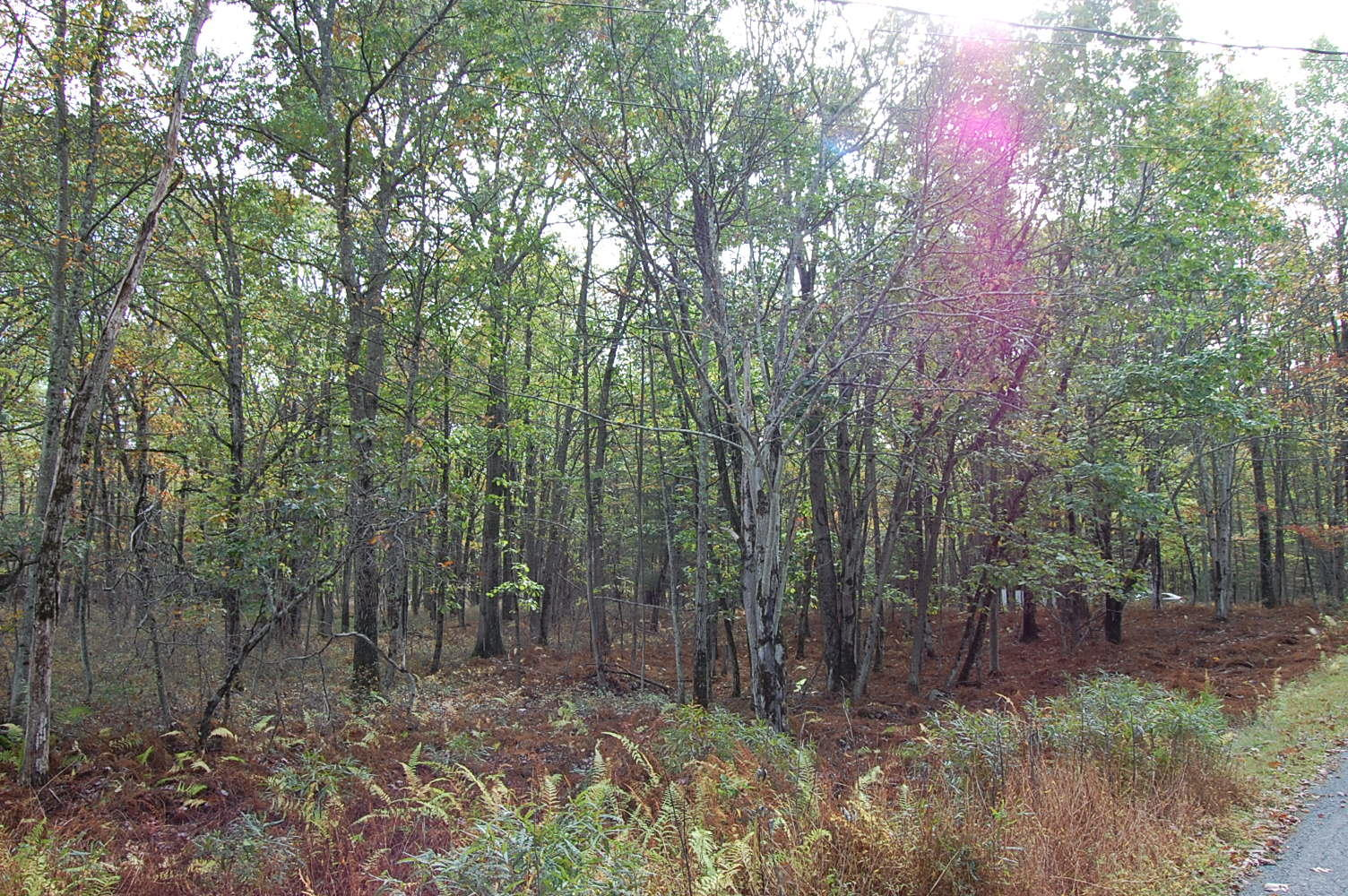 Wooded Haven in Pike County PA - Image 4